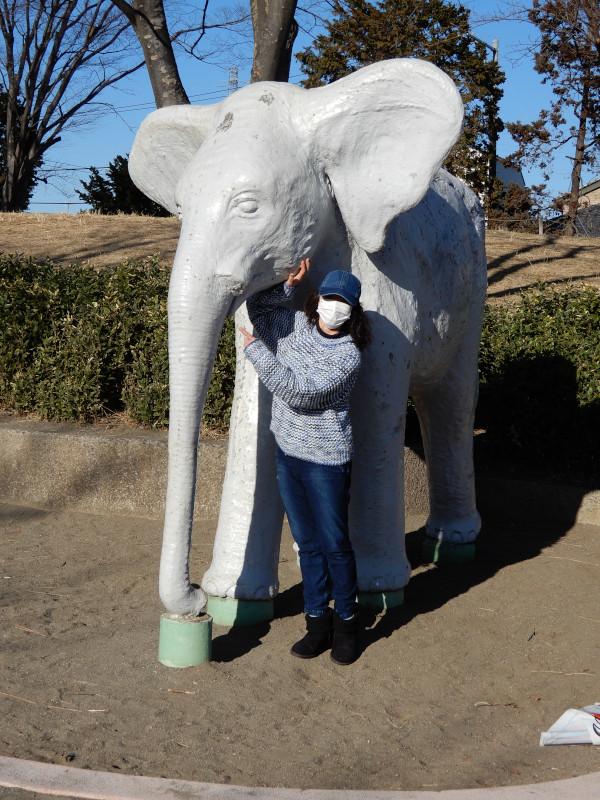 with a elephant
